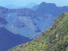 写真:多良岳の紅葉谷